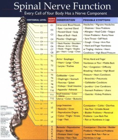 chiropractic-spinal-nerve-chart-functions